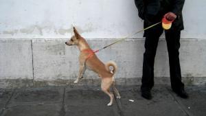 dog-on-retractable-leash
